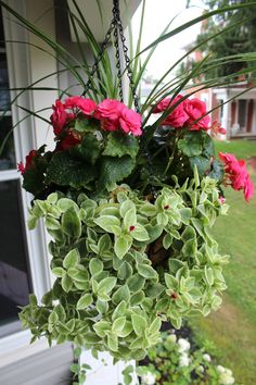 The Perfect Hanging Basket Container Plants, Container Gardening, Flower Containers, California Garden, Outdoor Planters, Green Garden, Window Boxes, Hanging Baskets, Porch Decorating