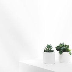 Succulents for a little touch of green . - Architecture and Home Decor - Bedroom - Bathroom - Kitchen And Living Room Interior Design Decorating Ideas - Plant Aesthetic, White Aesthetic, Cactus Plante, Plants Are Friends, Minimalist Photography, Green Plants, White Plants, Cacti And Succulents, Belle Photo