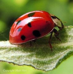 How To Start a Ladybug Garden DIY To Avoid Pesticides