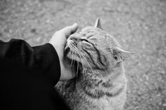 Adorable Animals, Cool Cats, Wordpress, Black And White, Blog, Pictures, Photographers, Monochrome, Animales