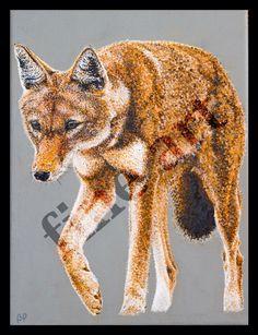 """ Ethiopian Wolf "" Mixed Media"