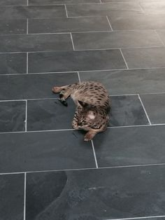 Montauk Black Slate Floor installed, great deal from Home Depot