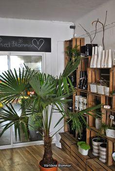 Palm Vettiga priser och färska blommor Blomsterbutik Världens Blommor
