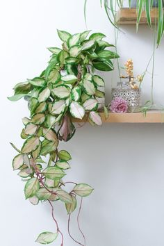 34 Nice Outdoor Hanging Plants Design Ideas - Every home becomes cozier with some hanging or potted indoor plants. For the garden or along the front walkway, outdoor artificial plants will do. Large Plants, Green Plants, Potted Plants, Indoor Plants, Cactus Plants, Living Room Plants, Bedroom Plants, Living Rooms, Plant Aesthetic