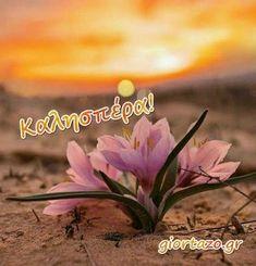Greek Language, Plants, Beautiful, Flowers, Flora, Plant