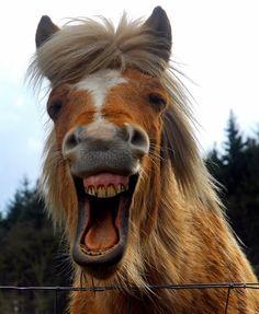 Lachend paard