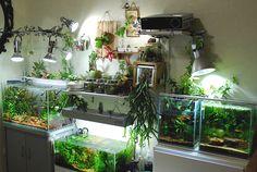 Live Aquarium Plants, Home Aquarium, Planted Aquarium, Saltwater Aquarium, Freshwater Aquarium, Aquarium Fish, Aquarium Design, Terrariums, Vivarium