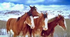 Watch this playful Christmas Clydesdale Budweiser ad that may never be shown on TV again