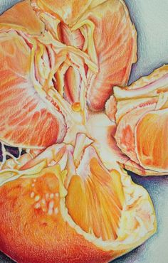 Fruit studies in guashe – A Level Art Sketchbook - Water Ap Studio Art, Ap Art Concentration, Kunst Portfolio, A Level Art Sketchbook, Sketchbook Ideas, High School Art Projects, Art School, Ap Drawing, Art Alevel