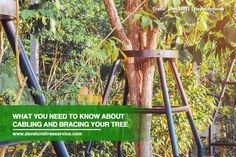 Taking good care of your trees is part and parcel of being a responsible tree owner. Cabling and bracing are some of the most effective methods of preserving your trees and looking after their safety. Learn about the importance of cabling and bracing your tree.