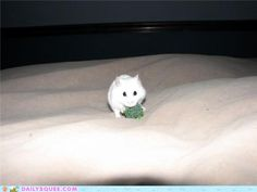 cute animals - Reader Squee: fluffernutter with broccoli