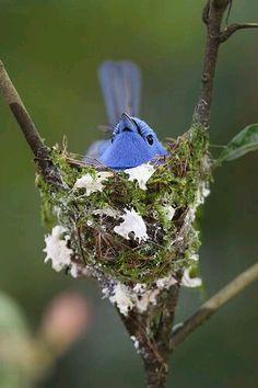 Original le nid