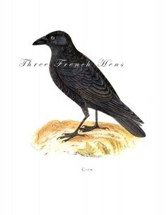 The Victorian Crow Note Flat Stationery, Set of 5