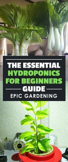 A series on #hydroponics for beginners - learn the science behind hydroponics and how to build your own homemade hydroponic systems! #hydroponicshomemade