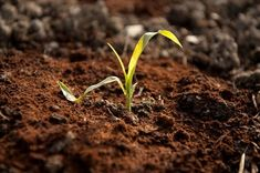 Hygge, Herbs, Health, Plants, Diy, Salud, Health Care, Bricolage, Herb