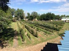 Improving Soil Health on Urban Farms — Webinar Portal