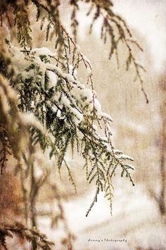 Snow on fir tree