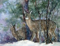 watercolor of deer in my back yard - pennsylvania whitetail | Flickr - Photo Sharing!