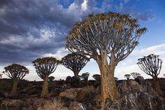 NAMIBIE : le diamant brut de l'Afrique
