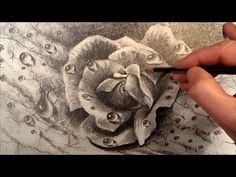 Dewdrops, How to Draw a Realistic Rose, Time Lapse
