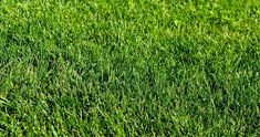 Green grass lawn in the garden, green flooring making concept, football pitch training or golf lawn. Green grass texture background, ground level view.Abstract natural background with selective focus Zoysia Grass, Windows Wallpaper, Photography Backdrops, Photography Bags, Photo Backgrounds, Textured Background, Grass Background, Natural Background, Green Grass