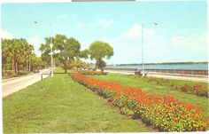 bayshore drive ~ tampa ~ florida. There is a huge sidewalk that runs down this road where people are constantly running, roller blading, and riding bicycles.