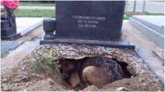 People Said This Dog Was Guarding Her Owner's Grave, But One Rescuer Uncovered A Stunning Secret - YouTube