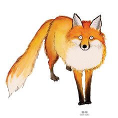 Red Fox (Vulpe vulpes) Watercolour, pen & ink illustration by Sarah Hammond The Red Fox is a member of the dog family, but also has some similar characteristics to cats, such as semi-retractable claws, almond-shaped pupils rather than round, and the agility to climb large obstacles such as fences and the occasional tree! It owes it's balancing abilities to it's thick furry tail or 'Brush' which also provides it with warm cover in winter ..