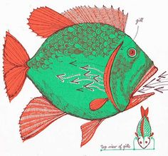 Fish illustration from Oxygen Keeps You Alive (via Vintage Children's Books My Kid Loves)