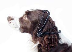 It's a Dog Speak Dog World: Concept Reads Canine Minds | Gadgets, Science