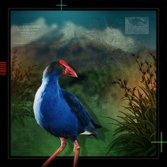 Art Print - x Bird, Art Prints, Gallery, Artist, Artwork, Pictures, Animals, Art Impressions, Photos