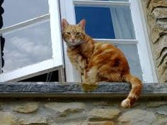 Image result for cat in a window