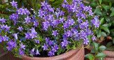 Outdoor Areas, Garden Plants, Shrubs, Perennials, Beautiful Flowers, Backyard, Landscape, Gardening, Patio