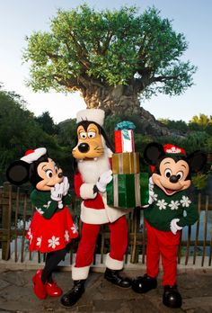 Animal Kingdom At Christmas