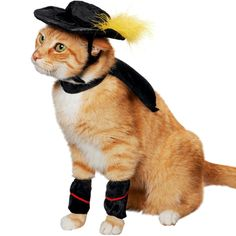 Cute Pet Halloween Costumes:   Want to involve your precious pets in the Halloween festivities?