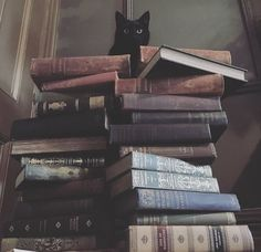 Black cat books and cat pets cute - books & libraries - . - Black cat books and cat pets cute – Books & Libraries – pets - Witch Aesthetic, Book Aesthetic, Black Cat Aesthetic, Autumn Aesthetic, Aesthetic Vintage, Crazy Cat Lady, Crazy Cats, Slytherin Aesthetic, Photo Chat