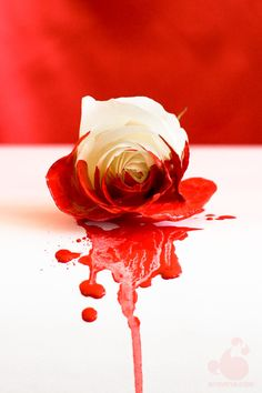 white rose painted red - Google Search