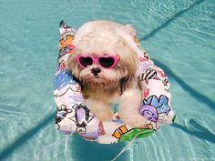 Comienza Julio y para muchos mes de vacaciones... ¡a disfrutar entonces! y aprovechar para que cómodamente os llevemos lo que necesitáis para vuestro #perro y #gato a domicilio en 24/48 horas allí donde estéis!! :D  Entra a http://www.perroverdeygatonegro.com  [#Perro con Gafas de Sol bañándose con un flotador en una piscina]