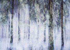 "Saatchi Art Artist Christoffer Relander; Photography, ""winter Vegetation III - Limited Edition #1/3 + 2 AP"" #art"