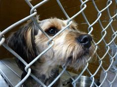 Lost and abandoned animals in one Indiana county must rely on the generosity of locals to receive care and medical attention due to the lack of a shelter. Demand that the county council allocate funds to set up a proper animal care facility so that pets in need are not abandoned.
