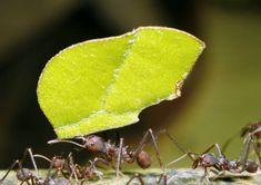como-acabar-com-formigas-cortadeiras-tecnologia-e-treinamento