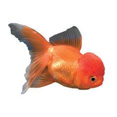 1000 images about aquarium fish on pinterest live fish for Petsmart fish guarantee