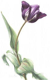 Botanical Illustration: April 2008