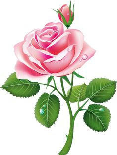 Illustration of beautiful pink rose vector art, clipart and stock vectors.