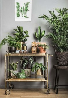 Home Decoration Handmade Four Amazing Benefits Of Keeping Indoor Potted Plants.Home Decoration Handmade Four Amazing Benefits Of Keeping Indoor Potted Plants Interior Plants, Interior Design, Deco Nature, Decoration Plante, House Plants Decor, Green Plants, Indoor Plants, Potted Plants, Foliage Plants
