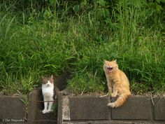 sleepy cats by Dan Nagasaka on 500px