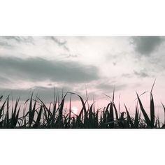 good dream . . . ♪Altea - Dominic Miller