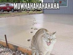 17 Cute Funny Cat Photos Will Light Your Day Stuff To Do When Im Bored At School - DIY Craft (5)