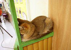 @nifty:デイリーポータルZ:プルプル立体猫写真