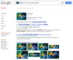 Google Search By Image Gets Smarter & Faster